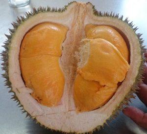 bibit durian ochee jambi